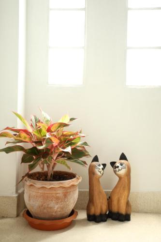 Thai Cat Hostel photo 67