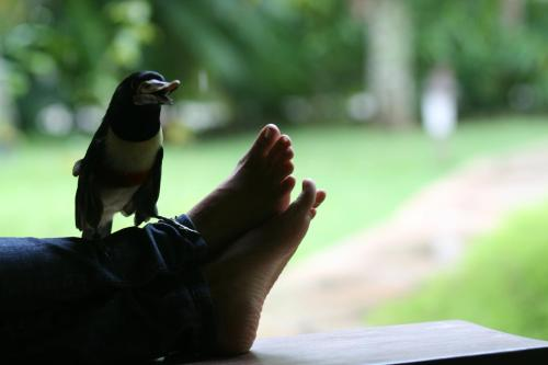 Pousada Jacarandá Photo