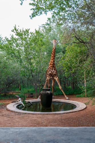 Shikwari Game Reserve Photo