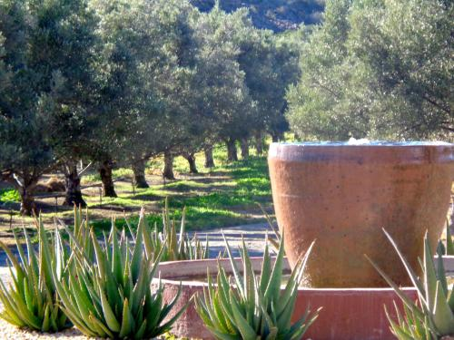 Olive Grove Guest Farm Photo