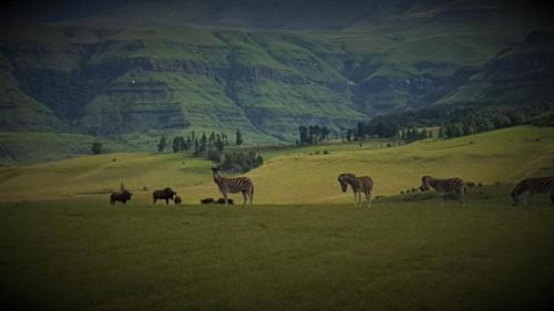 Drakensberg House Photo