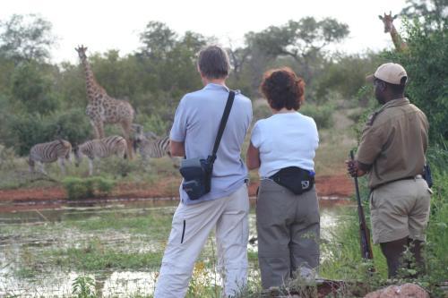 Mohlabetsi Safari Lodge Photo