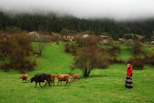 Yavuzkemal Homestay Süllü Dağ Evi indirim kuponu