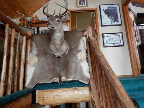 Idle Spurs Bed & Breakfast Photo