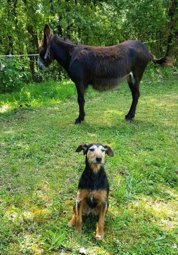 Le Cerf Thibault en Brenne
