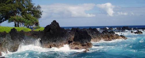 Paki Maui 222 Photo