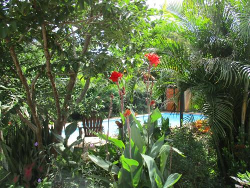 villa jungle Photo