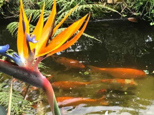 SuaCasita - JARDINS 5 LAGOS Photo