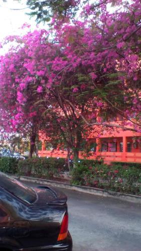 SJ Apartment Ayutthaya photo 6