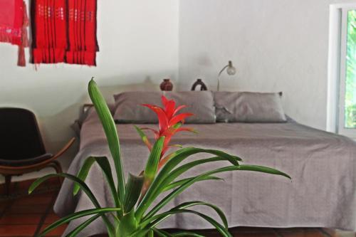Hotel Que Onda Photo