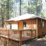 9s Pine Cabin