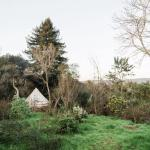 Tree Canopy Shangri-la