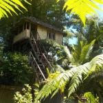 Tanna Eco Venture Bungalow & Adventure Tree House