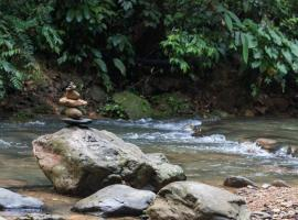 Hotel Photo: Rain Forest Guest House