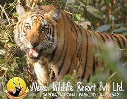 Hotel photo: Nepal Wildlife Resort