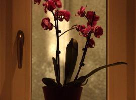 Hotel photo: Apartment Cvjetni