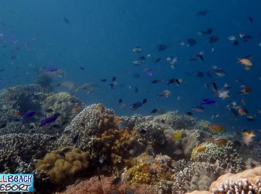 酒店照片: Wellbeach Dive Resort