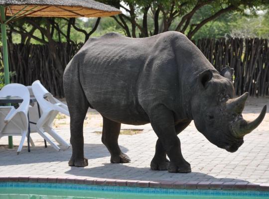 Zdjęcia obiektu: Khama Rhino Sanctuary