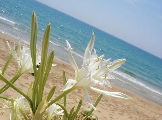 Otel fotoğrafları: Villa Fiori Beach