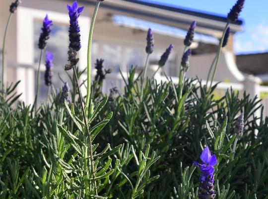 Хотел снимки: Lavender Terrace B&B