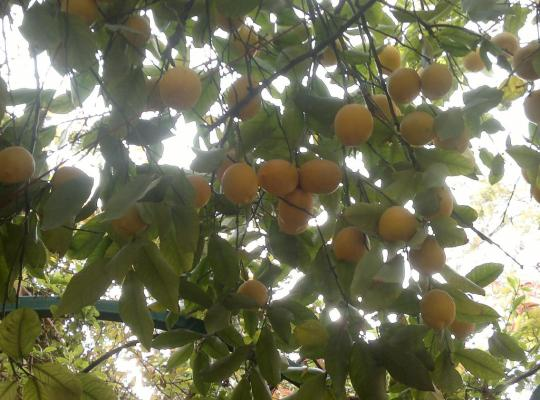 Hotelfotos: By The Lemon Tree