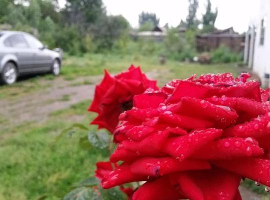 Zdjęcia obiektu: Guest house Krasnii Zvetok