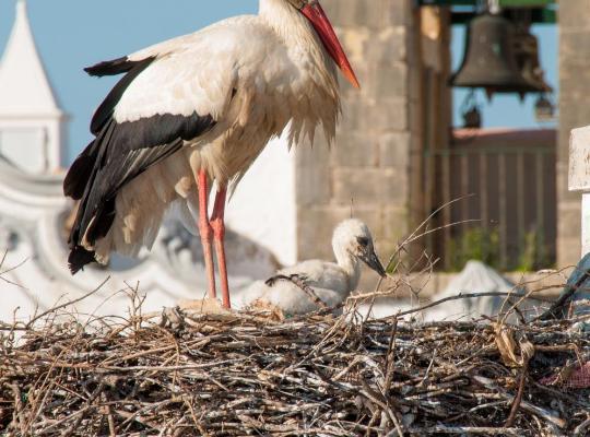 Хотел снимки: Stork Hostel