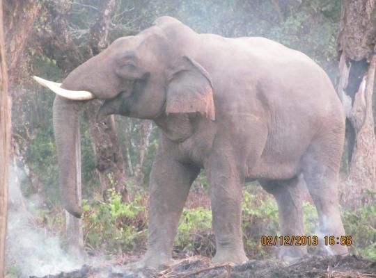 Ảnh khách sạn: Chitwan Tiger Camp