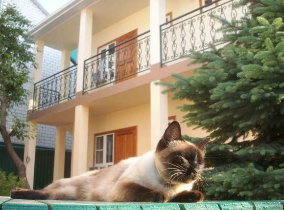 Гостевой дом Элис, Анапа