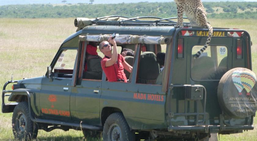 Best time to travel Kenya Fig Tree Camp - Maasai Mara