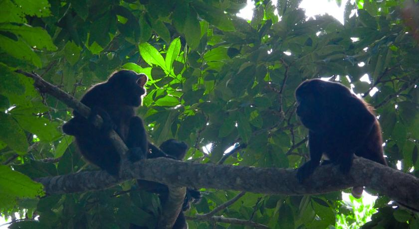 More about Alouatta Lodge