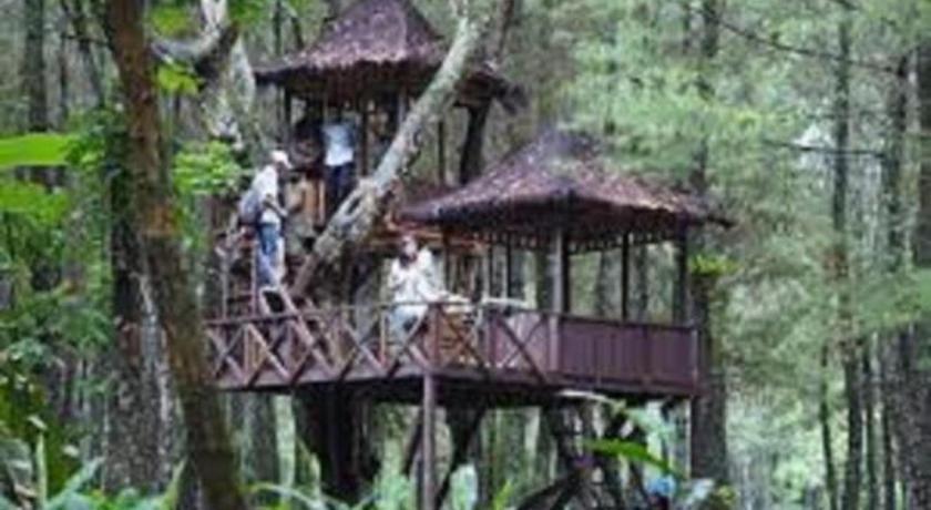 Book Wisata Pinus Songgon In Banyuwangi Indonesia 2019 Promos