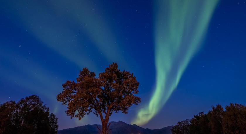 Best time to travel Norway Arctic Garden