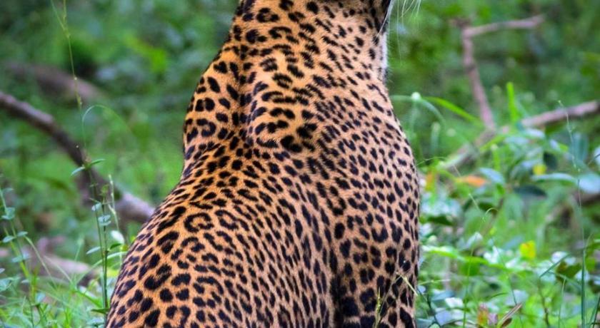 Viveka Inn Guest and Yala Safari