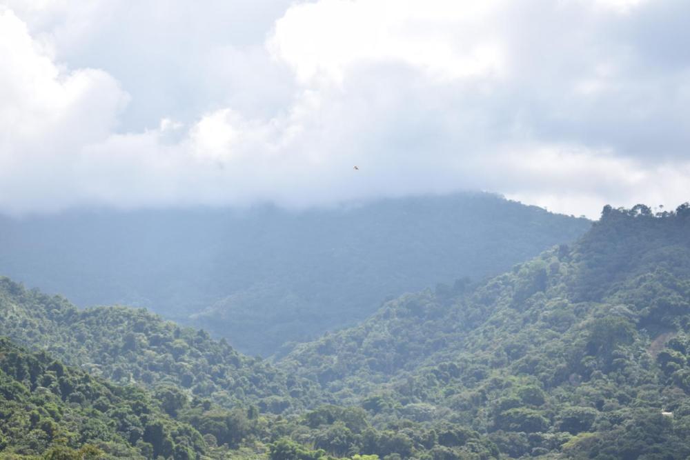 Hospedaje Los Pinos Cabana En Minca Prices Photos Reviews Address Colombia