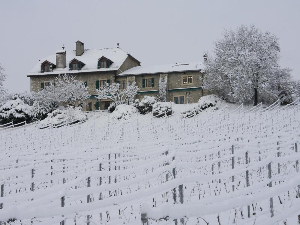 Foto - Domaine de Châteauvieux