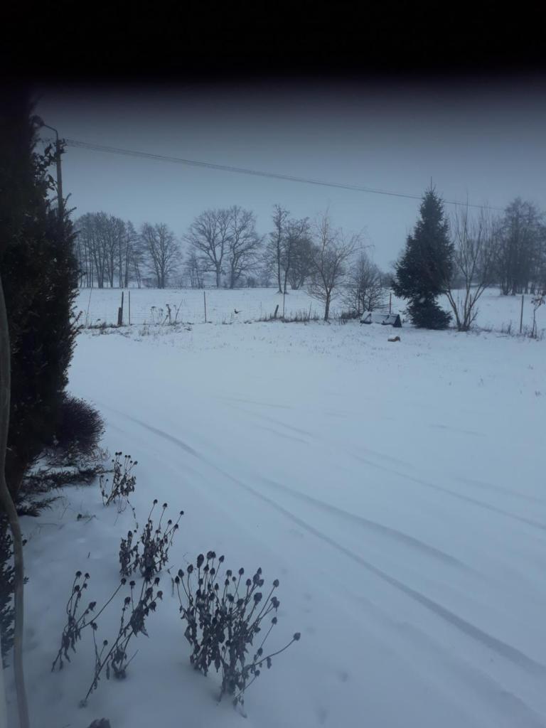 Wypadek na przejedzie kolejowym w Zielecu - Info Sadowne