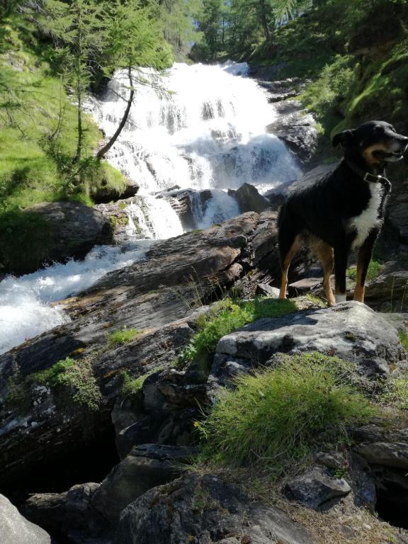 Alpe Ciamporino