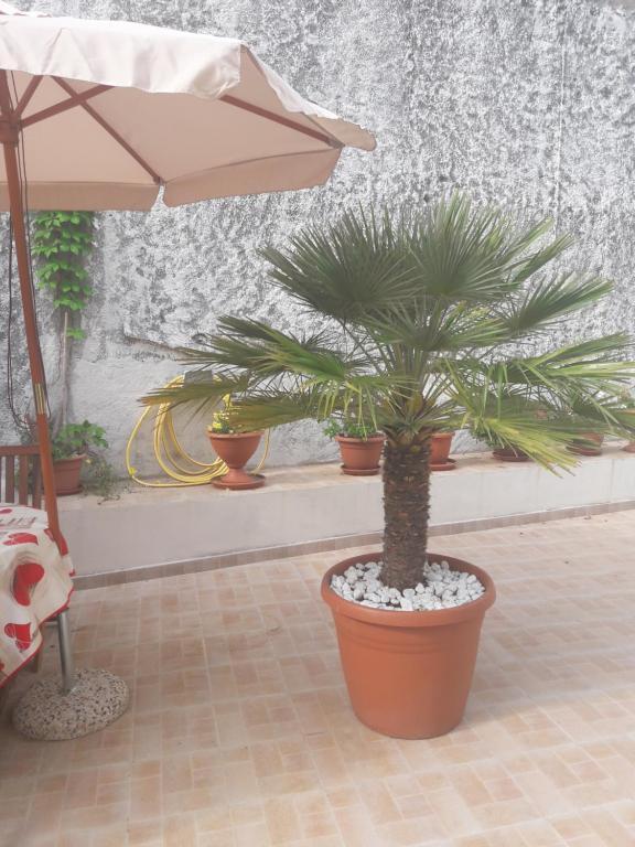 Casa Corona image3