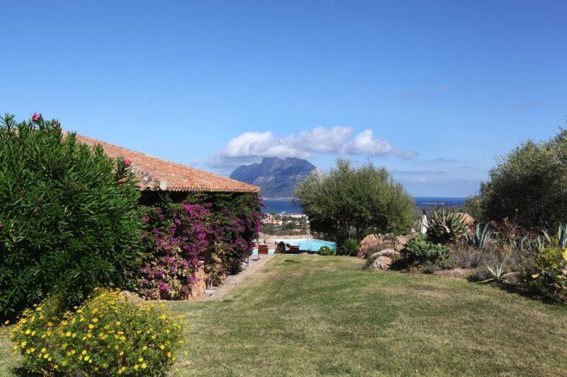 Olbia Villa Sleeps 14 Pool Air Con WiFi bild2