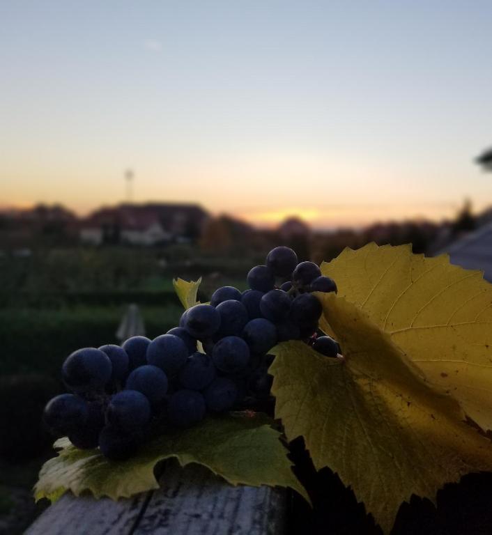 noclegi Mielno Pokoje Gościnne Pod Winogronami