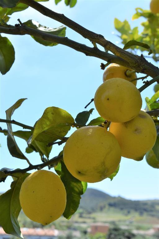 Casa dei Limoni img1