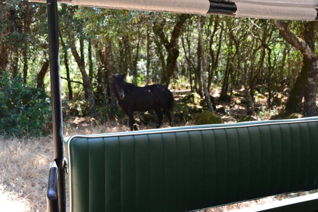 Farm stay Il Borgo dell'Arcangelo img5