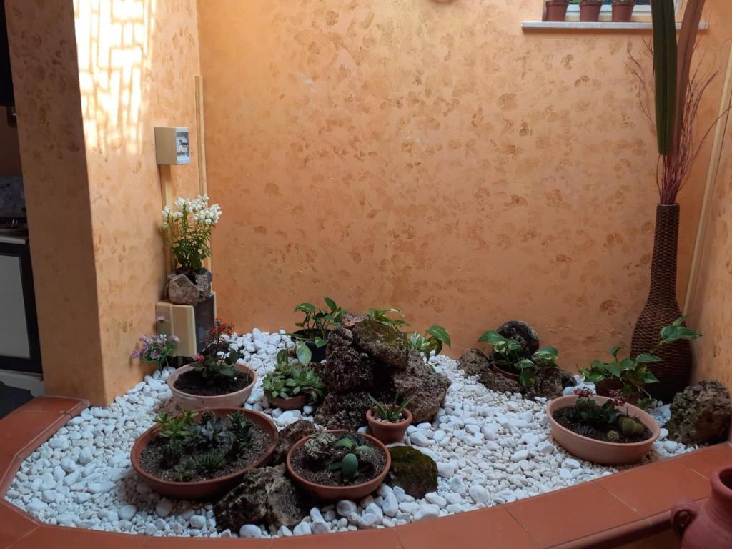 Villa del Pino img8