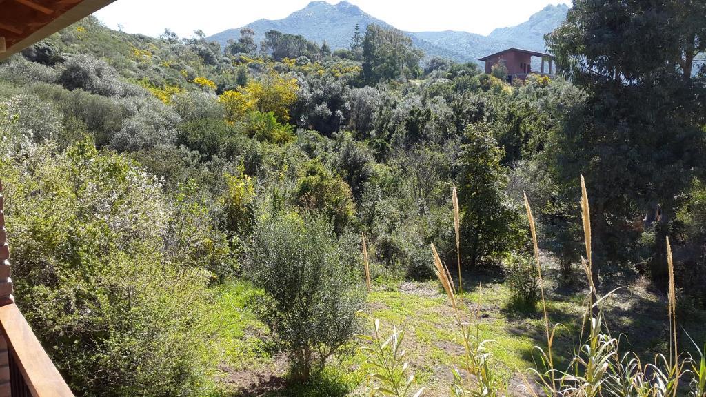 Villa l'orto Portixeddu Sardegna img9