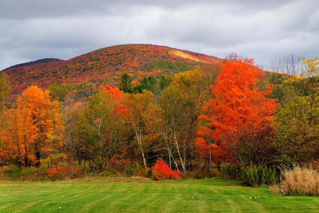 Windham Bed And Breakfast