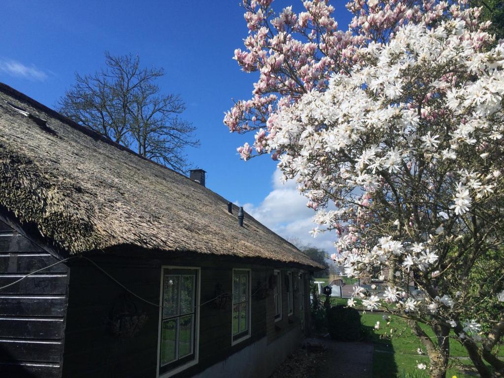 The Black Sheep Hostel, 8355 CC Giethoorn