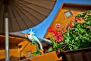 Kakadu domki letniskowe Niechorze
