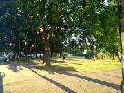Pod Areną