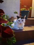 Pod Gadającym Kotem